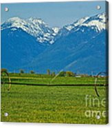 Spring On The Missions Acrylic Print