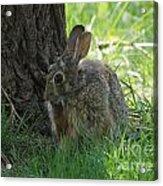 Spring Rabbit Acrylic Print