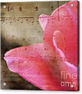 Spring Sings Acrylic Print