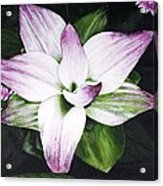 Spring Surprise Acrylic Print