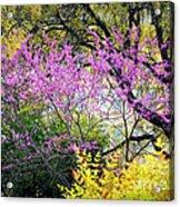 Spring Trees In San Antonio Acrylic Print