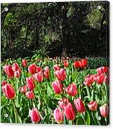 Spring Tulips 1 Vertical Acrylic Print