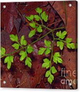 Spring Will Come Acrylic Print