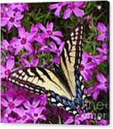 Spring's Beauty Acrylic Print by Crystal Joy Photography