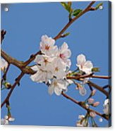 Springs In The Air Acrylic Print