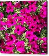 Springtime Flowers Acrylic Print