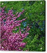 Springtime Acrylic Print