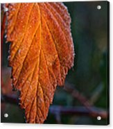 Sprinkled Frost Acrylic Print