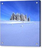 Spruce Grove In Winter Acrylic Print