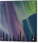 Spruce Silhouette Acrylic Print
