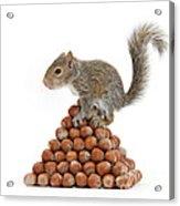 Squirrel And Nut Pyramid Acrylic Print by Mark Taylor