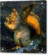 Squirrel At Riverfront Park Acrylic Print