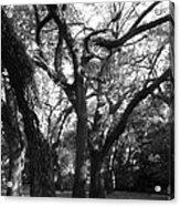 Squirrel Grove Acrylic Print