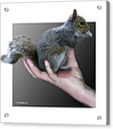 Squirrel In Hand Acrylic Print