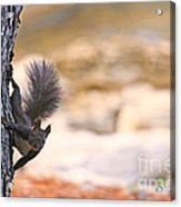 Squirrel Sitting On The Tree  Acrylic Print