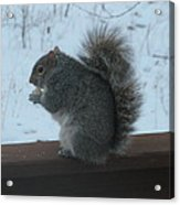 Squirrel Snack Acrylic Print