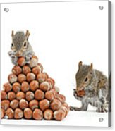 Squirrels And Nut Pyramid Acrylic Print