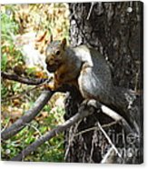 Squirrling Away Acrylic Print