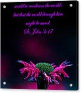 St. John 3  17  And Bee Balm Acrylic Print
