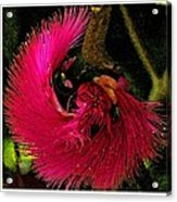St Kitts Flora Acrylic Print