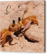 St. Lucia Crab On Beach Acrylic Print