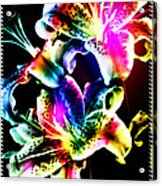 Stack Of Stargazers Dreaming Acrylic Print