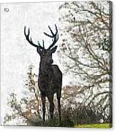 Stag On Hillside Acrylic Print
