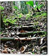 Stairs In The Forest Acrylic Print by Jenny Senra Pampin