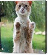 Standing Cat Acrylic Print