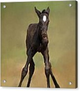 Standing On All Fours Acrylic Print
