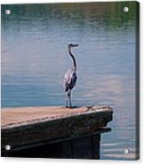 Standing On The Dock Acrylic Print