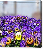 Standing Out In The Crowd Acrylic Print