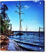 Standing Tall Goose Creek State Park Acrylic Print by Joan Meyland