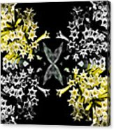 Star Flowers Acrylic Print