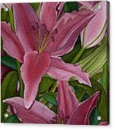 Star Gazer Lilies Acrylic Print by Vikki Wicks