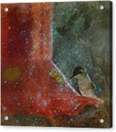 Stargazing Hummer Acrylic Print by Cindy Wright