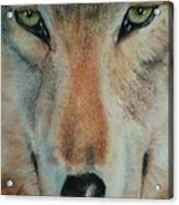 Staring Contest Acrylic Print by Joanna Gates