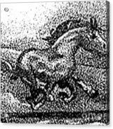 Startled Equus Acrylic Print