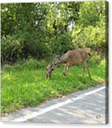 Stay Off The Road Bambi Acrylic Print
