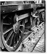 Steam Preserved Acrylic Print by Jacqui Collett
