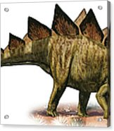 Stegosaurus Armatus, A Prehistoric Era Acrylic Print
