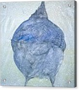 Stellar Jay From  Back Acrylic Print