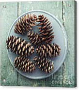 Stil Life With  Seven Pine Cones Acrylic Print