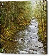 Still Creek Acrylic Print
