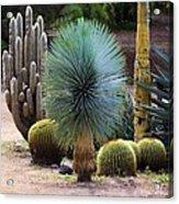 Still Life With Cactus Acrylic Print