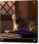 Still Life With Wine Fruit And Cat  Acrylic Print