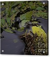 Stirring The Swamp Pot Acrylic Print