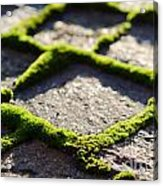 Stone Road With Green Moss Acrylic Print