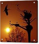 Storks Acrylic Print by Carlos Caetano