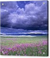 Stormy Clouds Approaching Field Of Acrylic Print